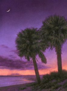 Palmetto Evening (small) by Michael Story